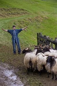 berger guide brebis