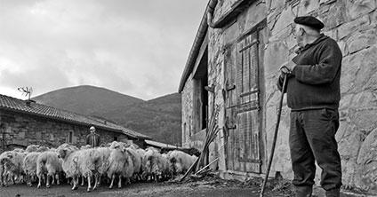 producteurs fromage noir et blanc